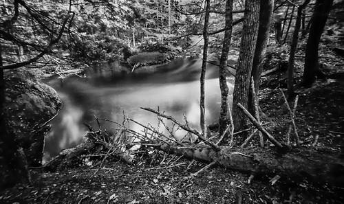 Skeletal Pine At The Jumbo River-Houghton County, MI