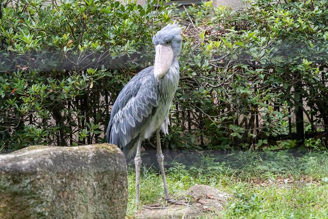 Chiba Zoological Park Sep 2019