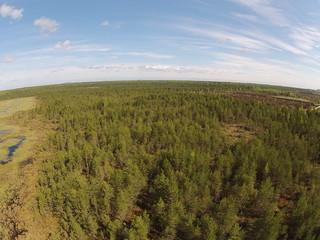 Langatusala ja turbaväli / Subsidence area and peat field, Estonia