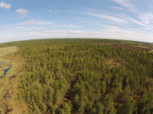 Langatusala ja turbaväli / Subsidence area and peat field, Estonia