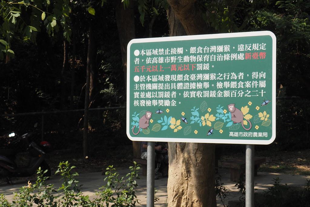 地方政府訂定法規,禁止民眾餵食、接觸獼猴。攝影:李育琴