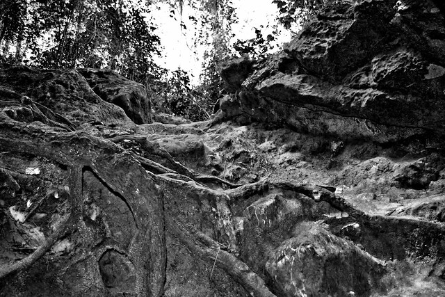 Dames Cave, Withlacoochee State Forest, Trail 22, Brooksville Ridge physiographic region, Citrus County, Florida, USA