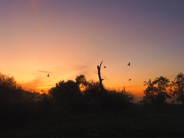 BIRDS SEARCHING THE SUNRISE P9140045