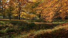 Herbstimpression aus dem Tiergarten zu Hannover