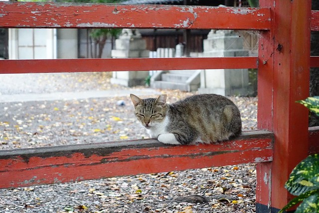 Today's Cat@2019-09-23