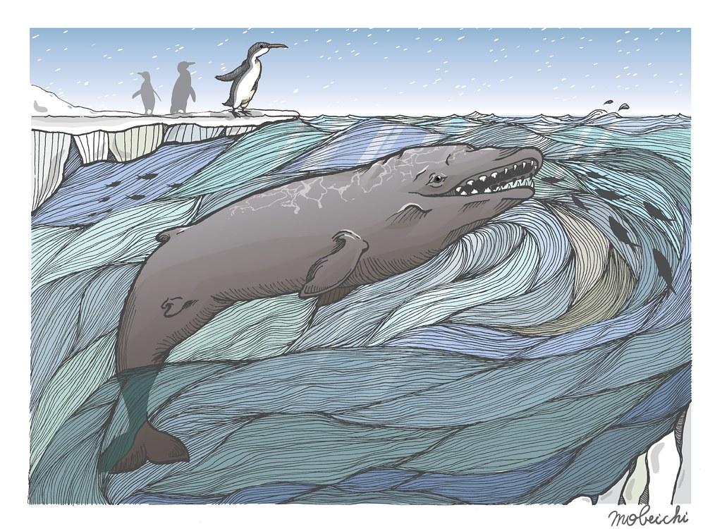 保育古生物學:刻齒雅諾鯨