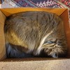 Fluff in a box #catsofinstagram