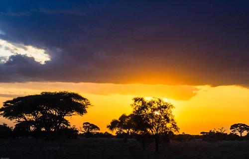 oiseaux kenya amboselinp sunset mai
