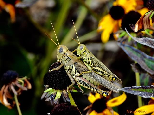 Grasshopper event