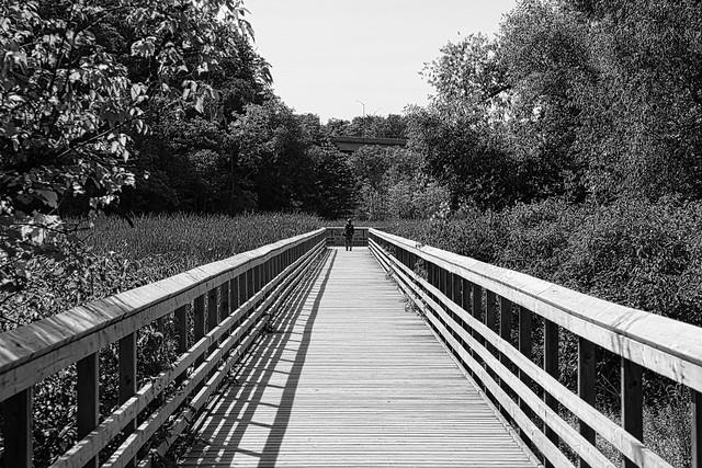 Grindstone Marsh Trail - RBG