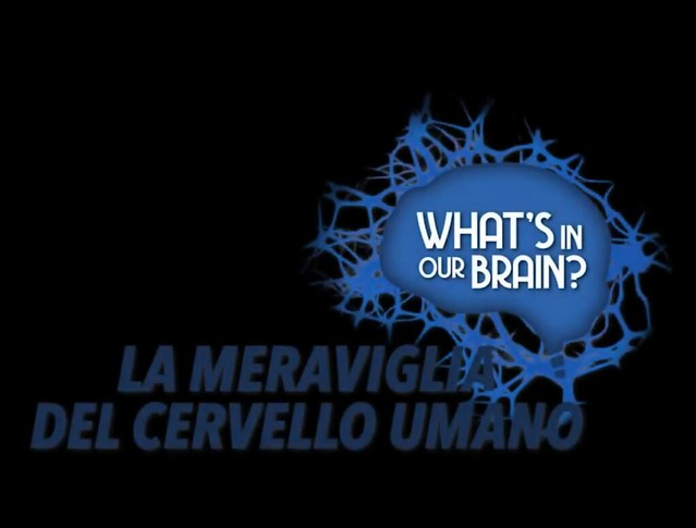Meeting 2019 - What's in our brain?