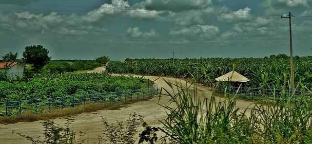 MEXICO, Yucatán ,  Tabasco,  Bananenplantage bei Villahermosa, 19288/11965