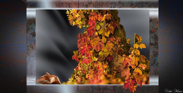 Hymne à l'automne