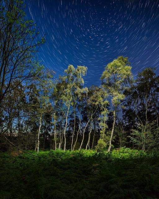 Star trails over Birch trees.
