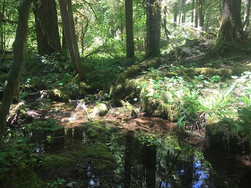 Mon, 09/23/2019 - 10:05 - Soil water level is high, and the stream is flowing strongly.  Looks like a moist spring for the WFDP!  Photo credit: Wind River Forest Dynamics Plot Facebook page