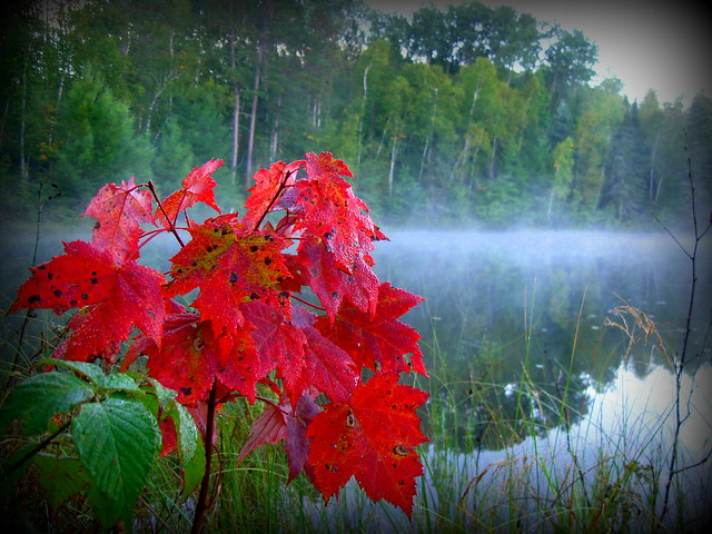 Fall colors at Cass Lake, Chippewa National Forest, Minnesota