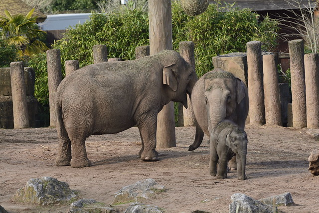 Chester Zoo (429)