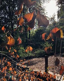Willkommen Herbst! 🍁🍂 So sonnig kann es ruhig ein wenig weitergehen in dieser Jahreszeit. ☀️ • • • • #herbstanfang #jahreszeit #jahreszeiten #draussen #bunteblätter #derherbstistda #goldenerherbst #derherbstkommt #halloherbst #