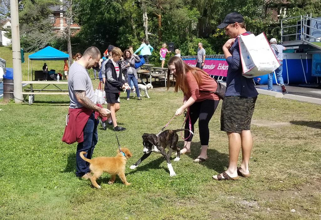 Newbarket Dog Festival