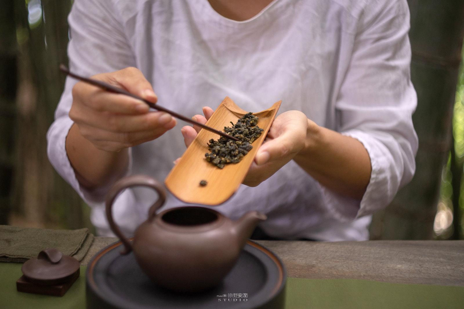 嘉義梅山當茶農,親子採茶一條龍 -14