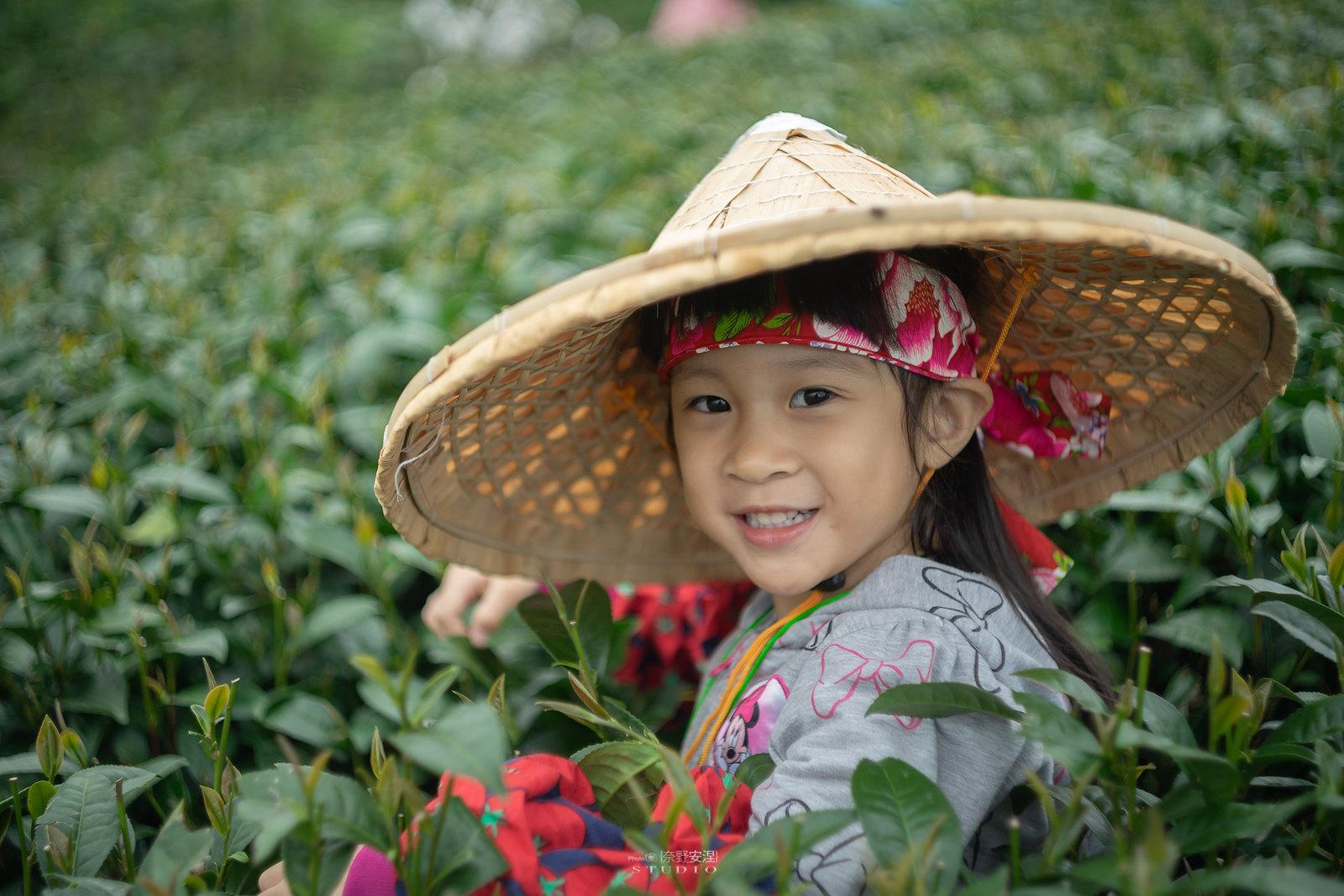 嘉義梅山當茶農,親子採茶一條龍 -1