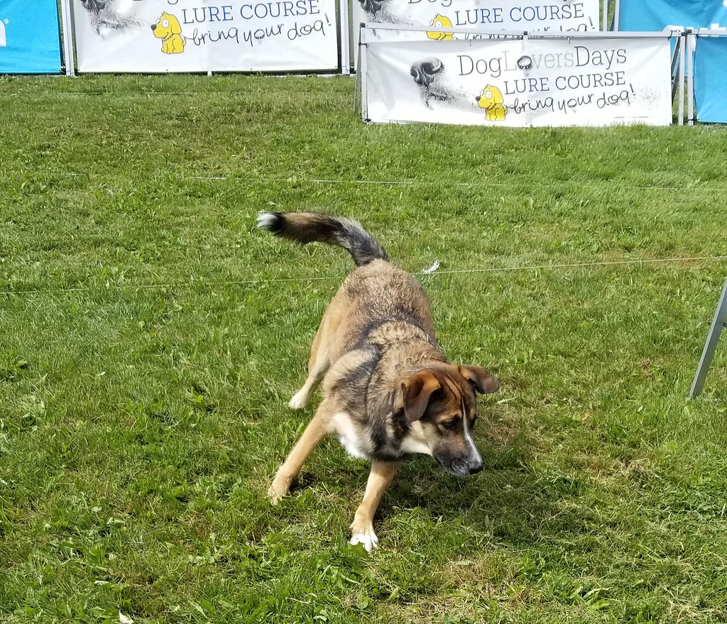 DogLoversDays Lure Course
