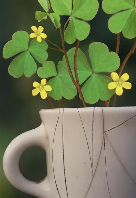 cracked mug used as planter for clover