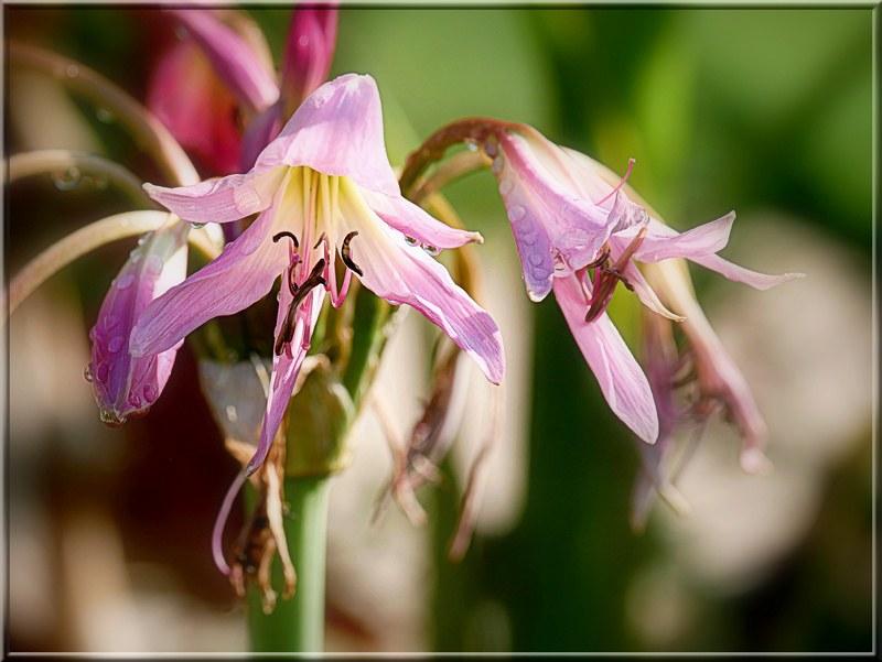 Au jardin des plantes. - Page 5 48783634786_d9766b7a19_c