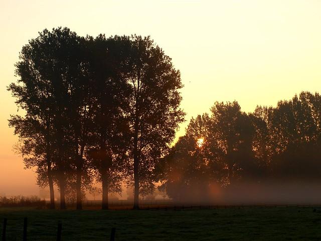 Die Ruraue am frühen Morgen.