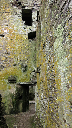 The lichen-covered stone walls of the Timoleague Friary Ruins in Ireland
