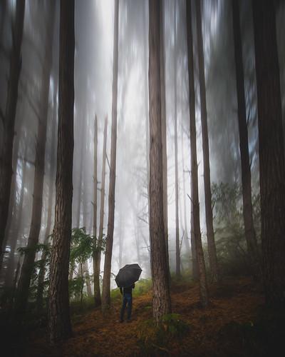 boschi settembrini