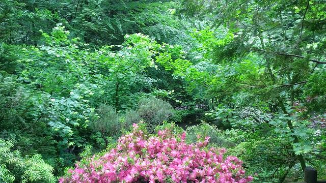 The Natural Garden, Portland Japanese Garden 5/23/2013