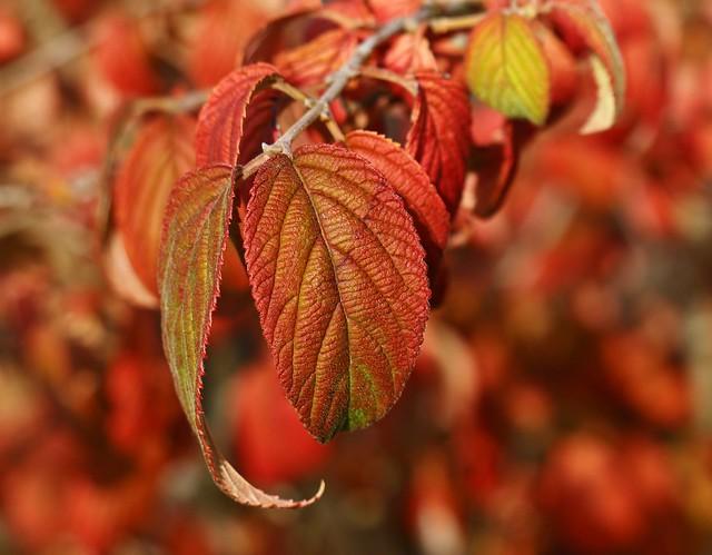 The beautiful colours of Autumn