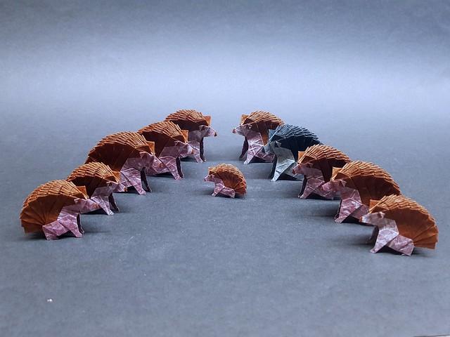 Hedgehog  Design: Yudai Imai Fold: Aarón Ramírez  Paper: 20x20 cm (5)              18x18  cm (2)              15x15  cm (3)               11x11   cm (1 )