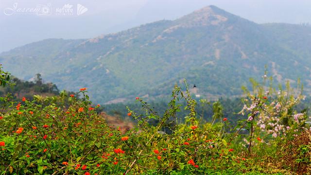 Attappadi Hills, Kerala