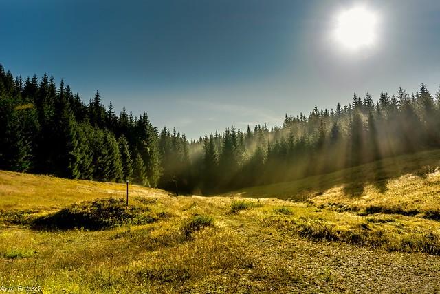 Morgens am Waldrand