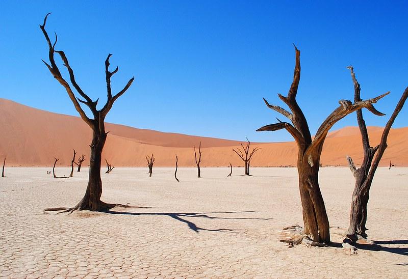 ASN-drought-tolerance-image
