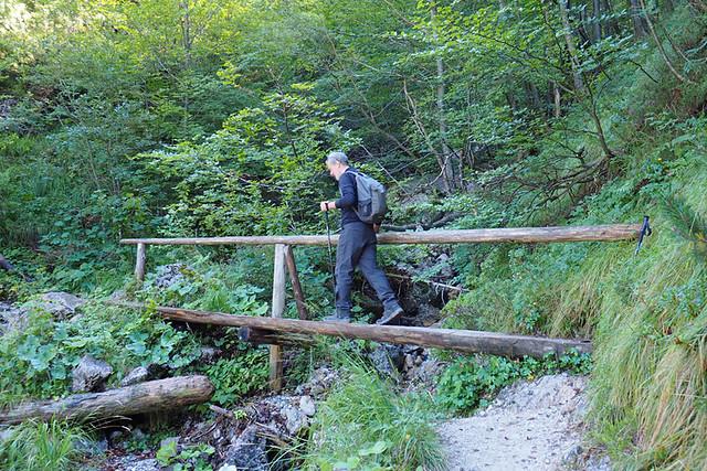 Ascending through the forest, Slovenia