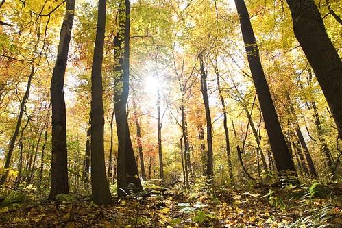fall seasons leaves trees autumn landscape sunlight yellow orange