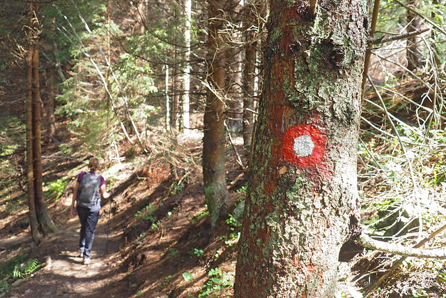 route waymarks through forest
