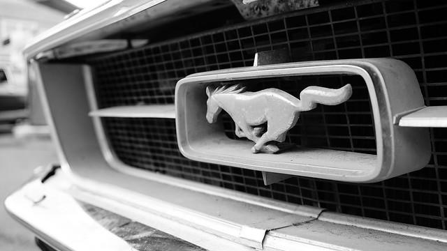 Pony in detail