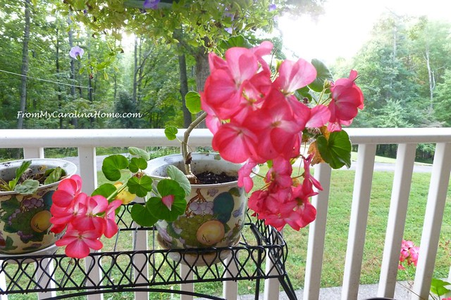 September in the Garden at FromMyCarolinaHome.com