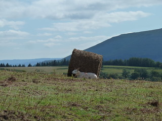 To Sugar Loaf (Abergavenny Circular walk)