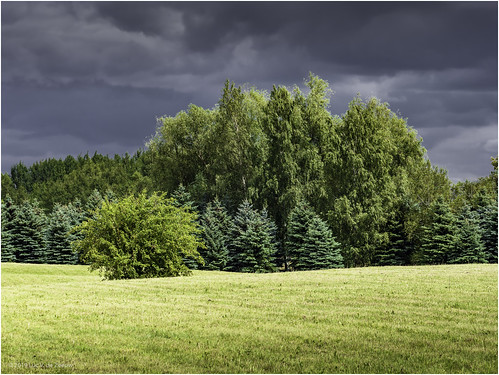 cloudy landscape trees domantai siauliaicounty lithuania