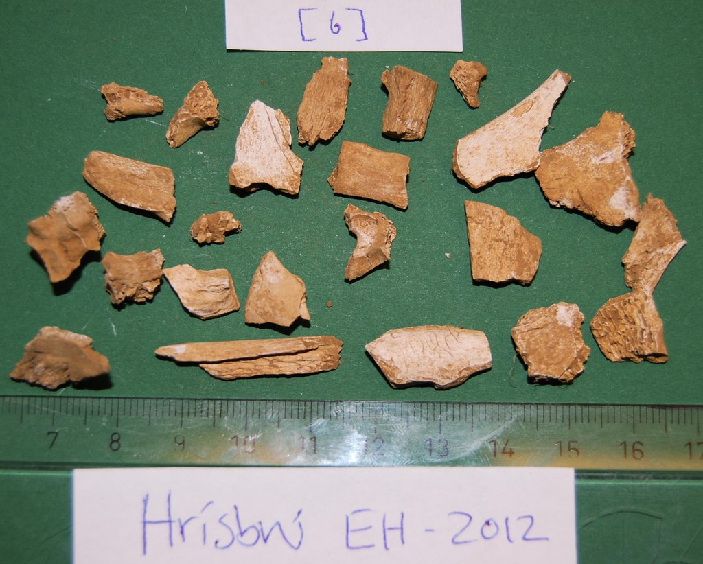 Fragments of animal bone that may be difficult to distinguish from human bone