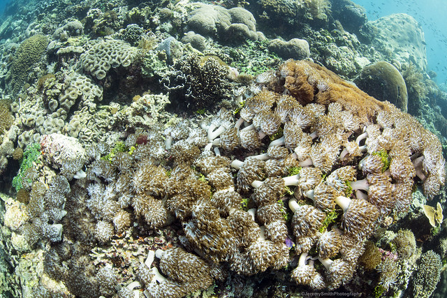 Coral Reefs of Alor, Indonesia