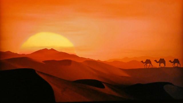 Egypt - Desert - Three dromedaries