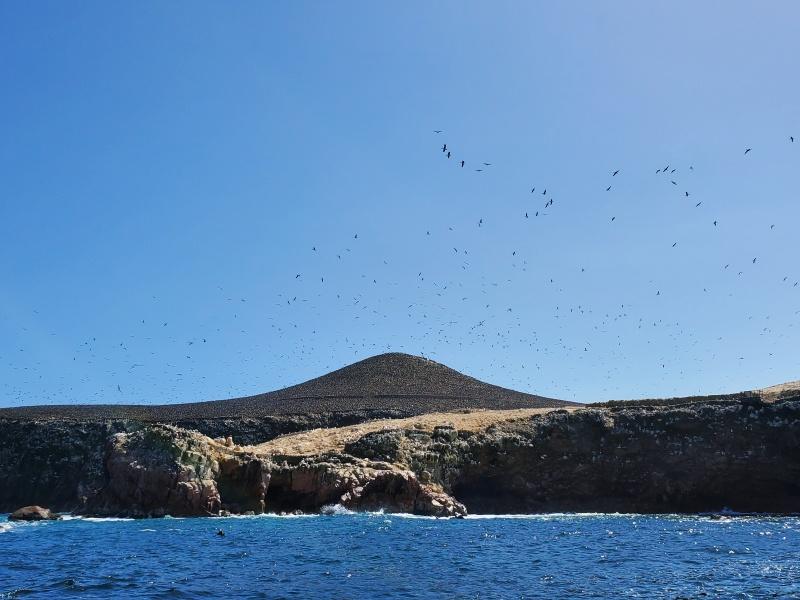 Ballestas Islands Paracas