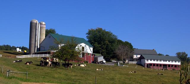 The Happy Farm
