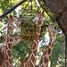 """<p><a href=""""https://www.flickr.com/people/shutterbugdancer/"""">shutterbugdancer</a> posted a photo:</p>  <p><a href=""""https://www.flickr.com/photos/shutterbugdancer/48790088257/"""" title=""""_MGL8875.jpg""""><img src=""""https://live.staticflickr.com/65535/48790088257_d7038c8b75_m.jpg"""" width=""""240"""" height=""""160"""" alt=""""_MGL8875.jpg"""" /></a></p>"""